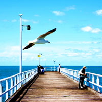The Gull Over The Jetty